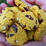 gluten free pumpkin cherry dog treats