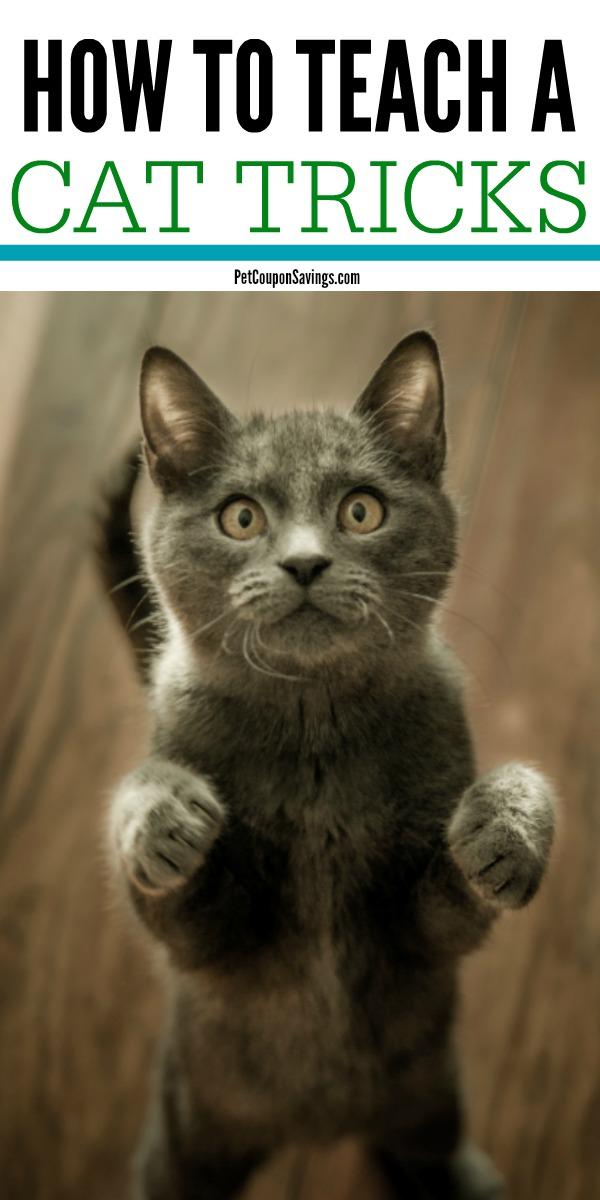 How To Teach A Cat Tricks