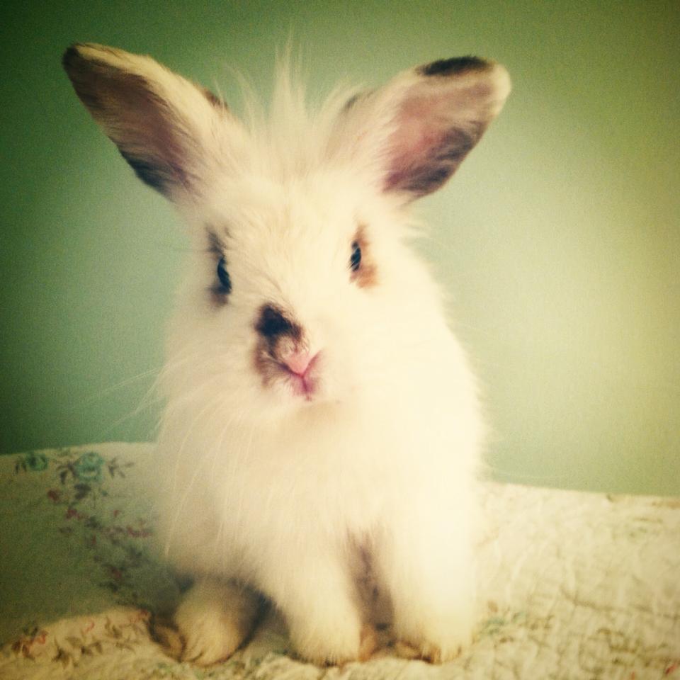 Meet My Pet-Seymour