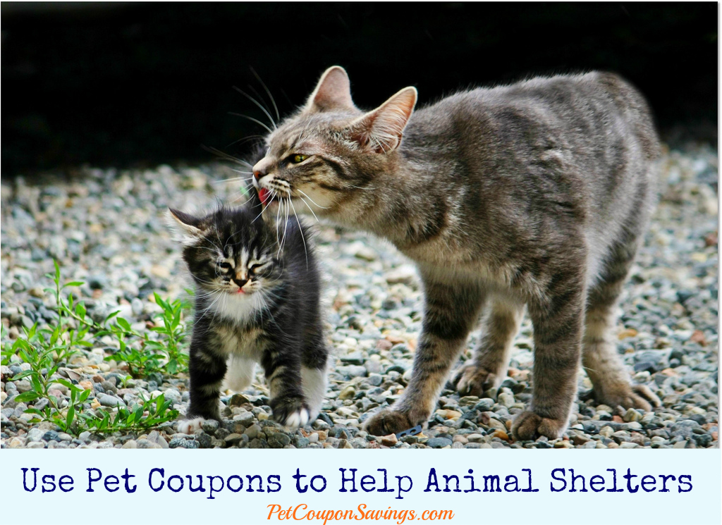 Use Pet Coupons to Help Animal Shelters