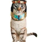 cleopatra cat costume