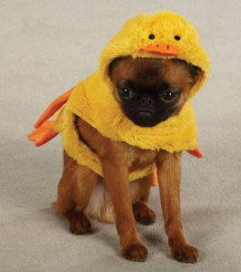 duck pet costume
