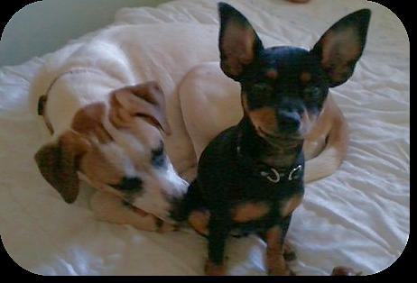 Meet My Pet-YoYo and Spaz