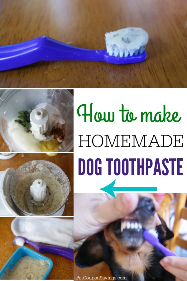 Homemade Dog Toothpaste Pet Coupon Savings