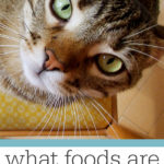 What Foods Are Toxic to Cats