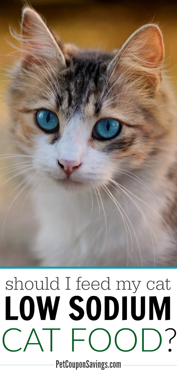 Low Sodium Cat Food: List of Brands and