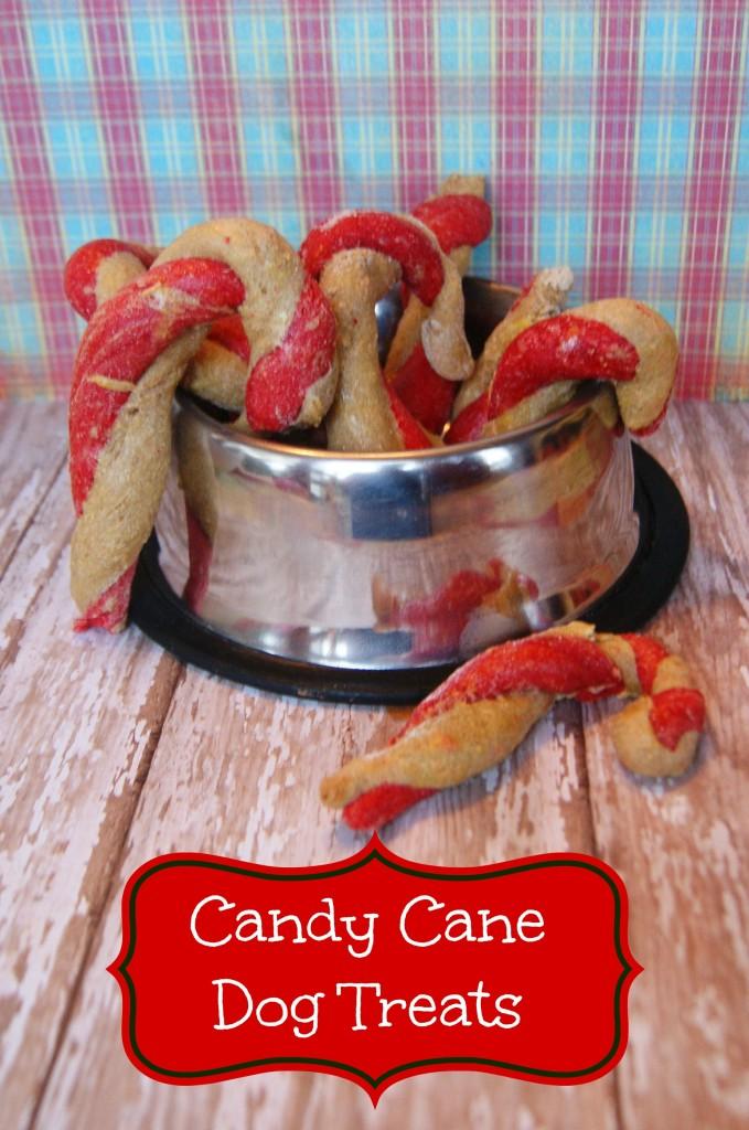 Homemade Candy Cane Dog Treats Pet Coupon Savings