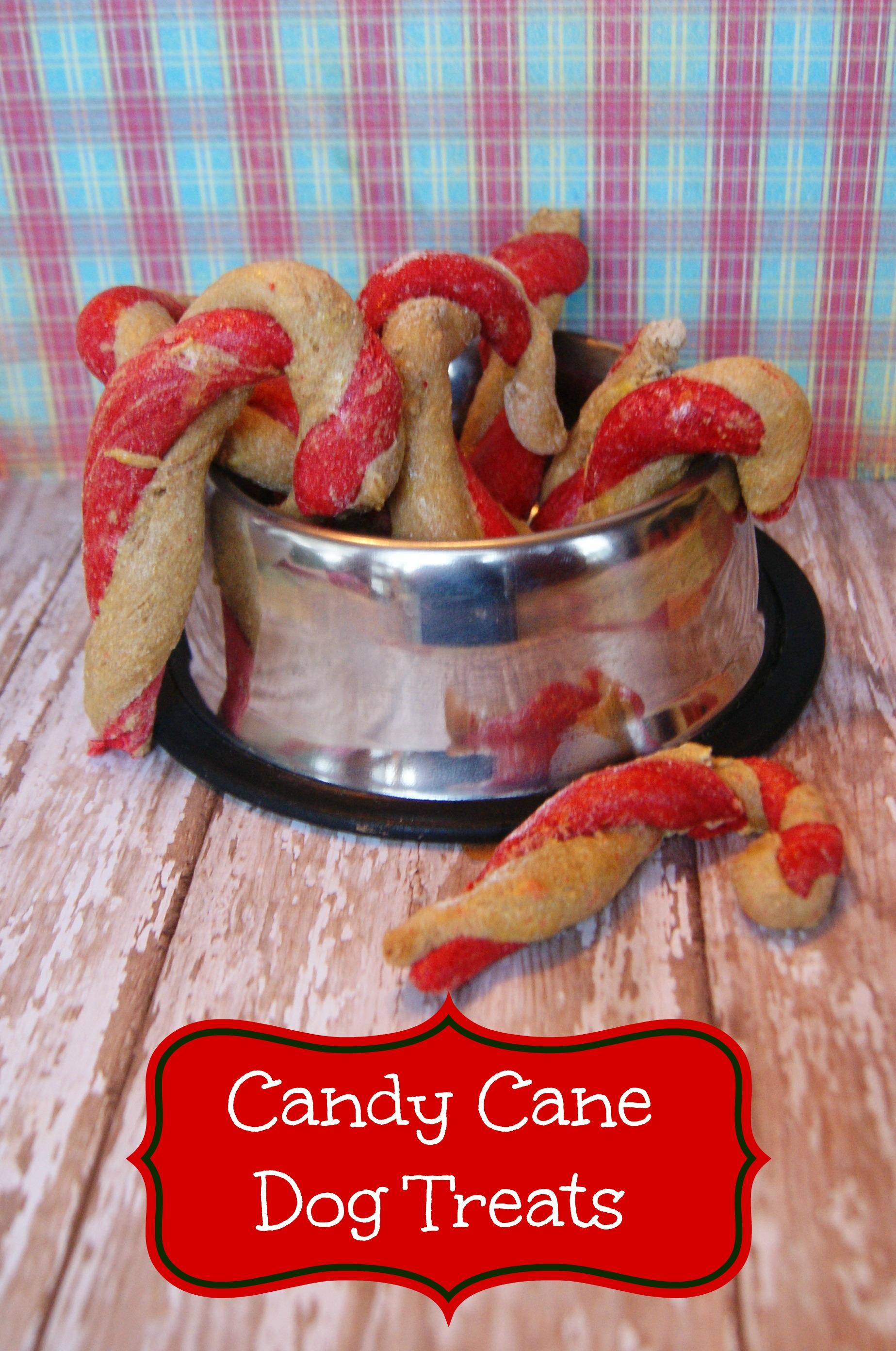 homemade candy cane dog treats