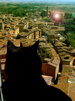Tommaso the Cat