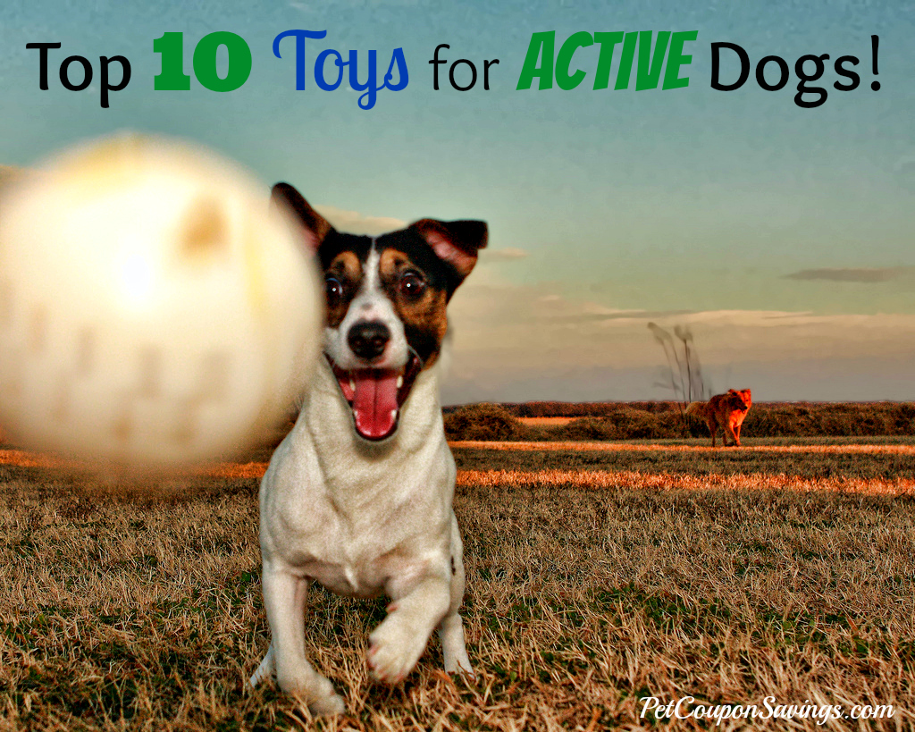 Top 10 Toys for Active Dogs