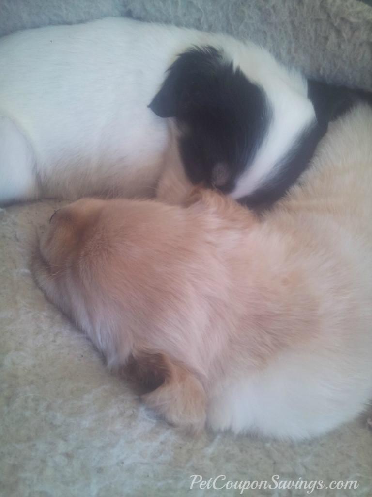 Best Dog Ever Nap Time