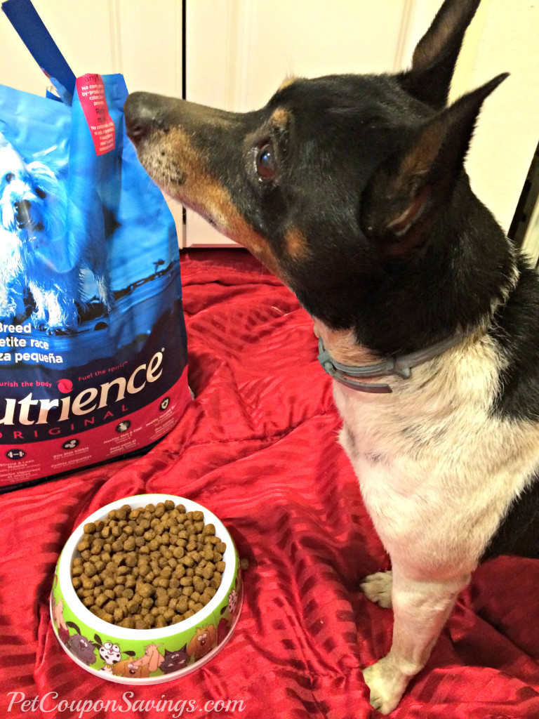 Rocky with Nutrience