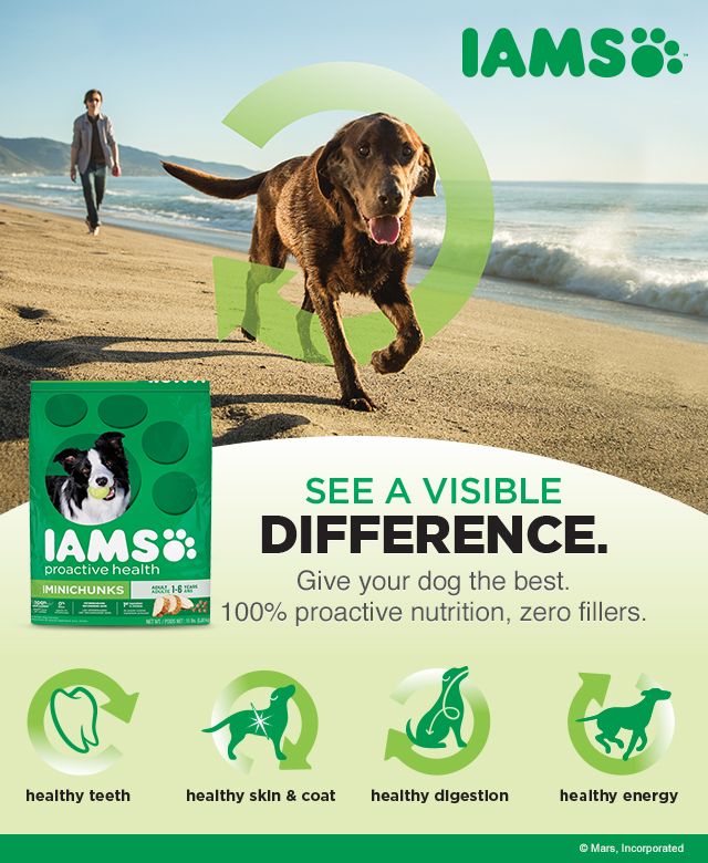 Iams Visible Difference