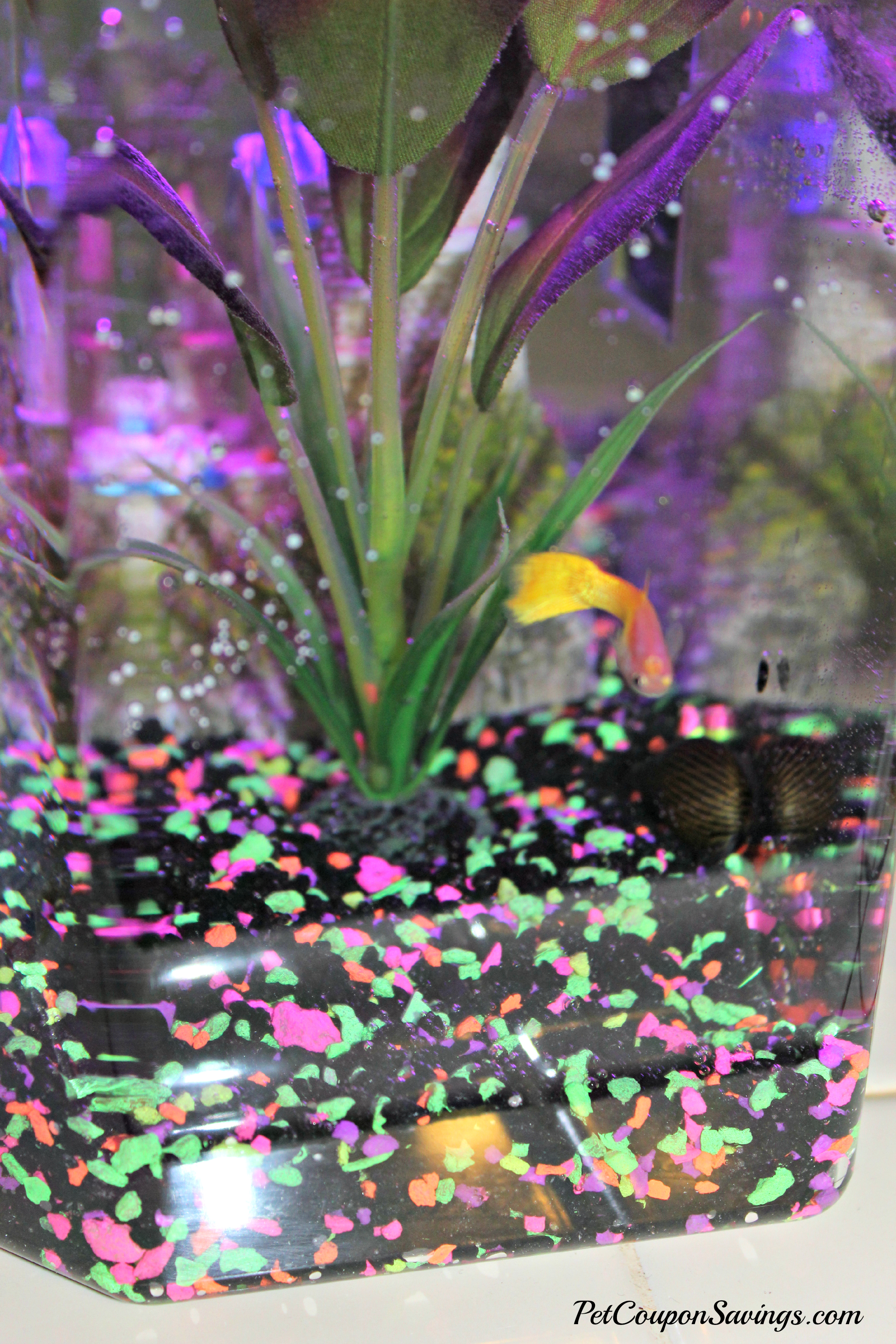 Fun Fish Tank Decorations Easy Fish Tank Setup With Api Fishcare Apifish