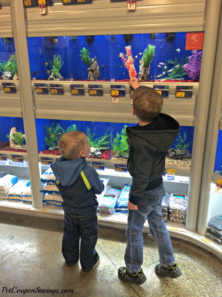 picking out fish