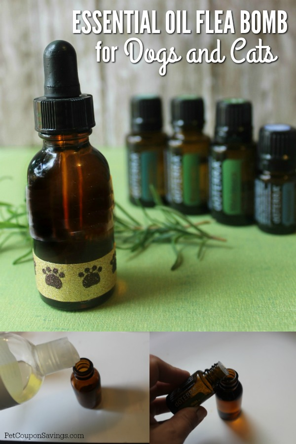 Essential Oil Flea For Dogs And