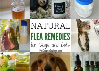 11 Natural Flea Remedies for Dogs and Cats