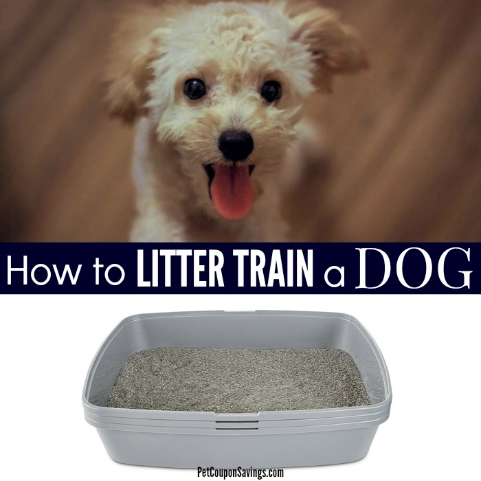 How To Litter Train A Dog