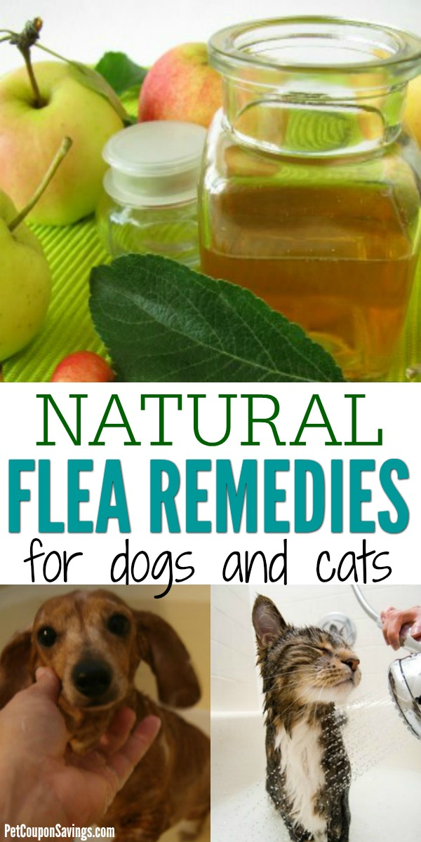 Natural Homemade Flea Repellent For Dogs