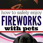 Fireworks Pet Safety